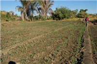 CA with Irrigated Maize